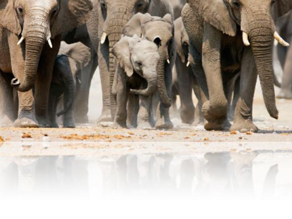 PR_Elephants_4C.jpg