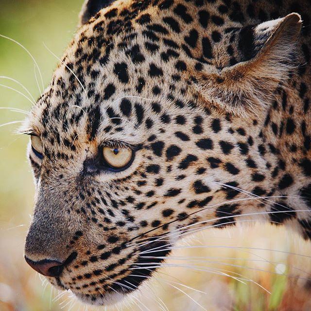 You can't depend on your eyes when your imagination is out of focus - Mark Twain #igkenya #masaimara #natgeoyourshot #natgeotravel #natgeowild #machonimwangu #africageographic #ig_africa #africageophoto