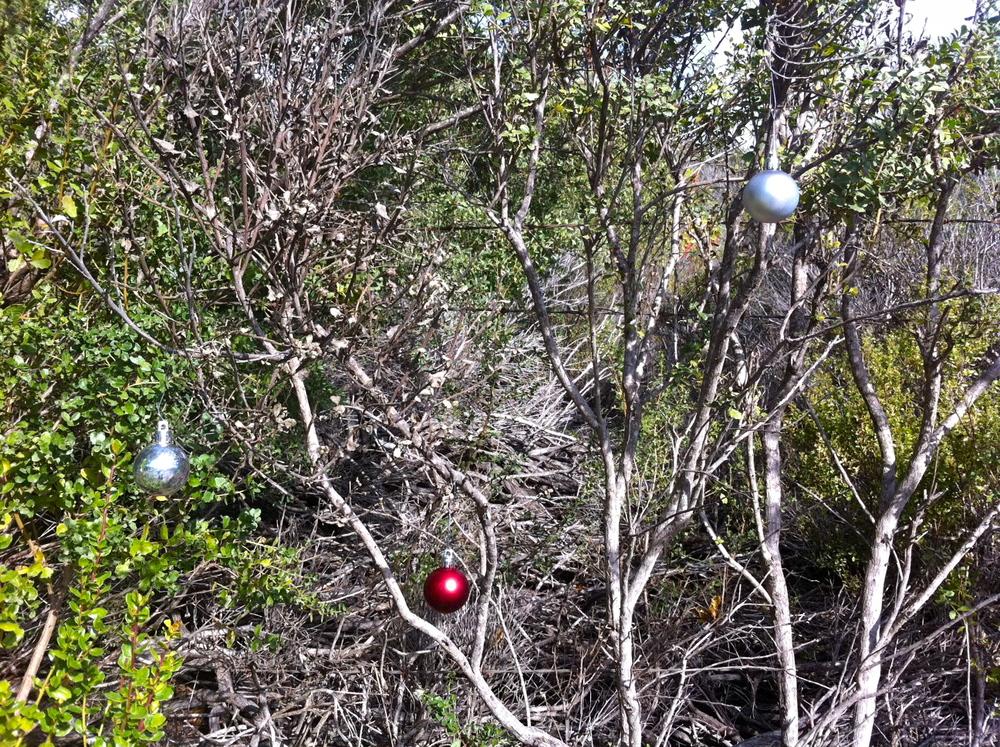 SCchristmastree