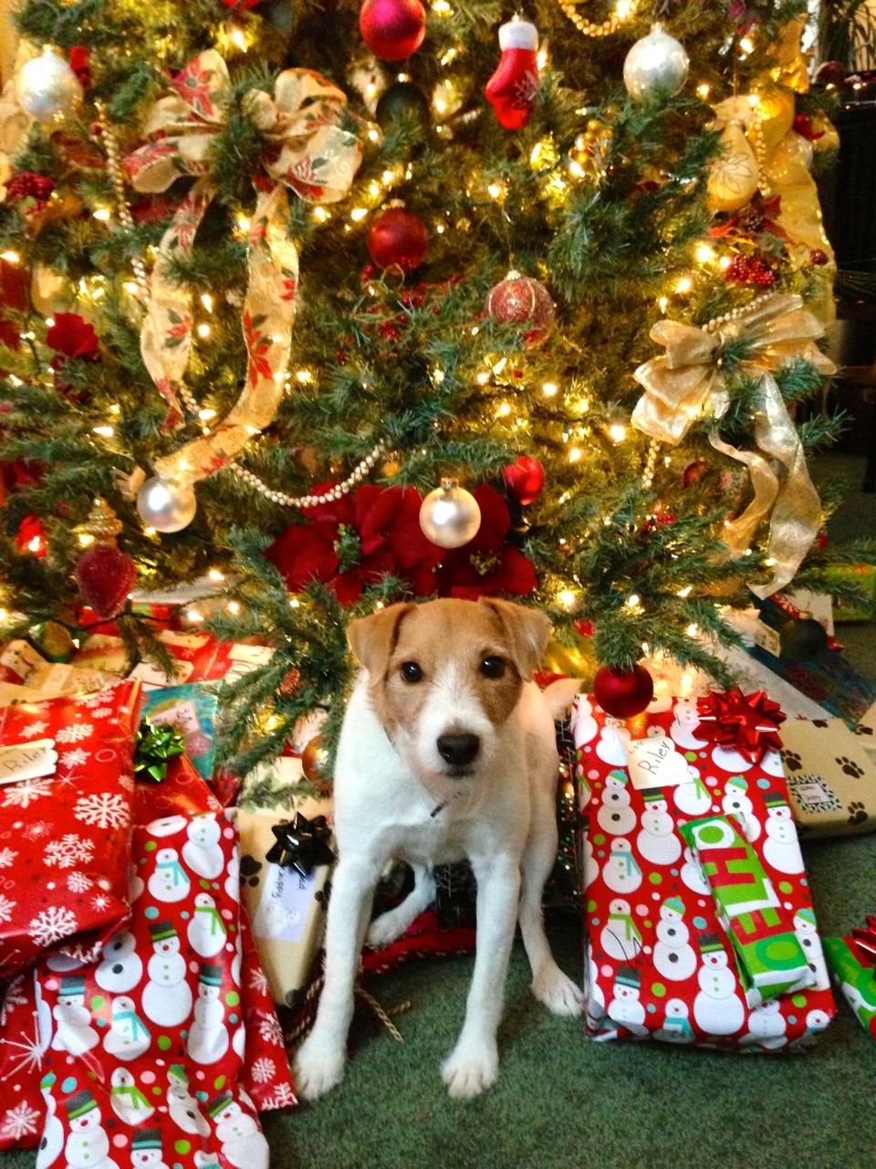 Merry Chipmas!