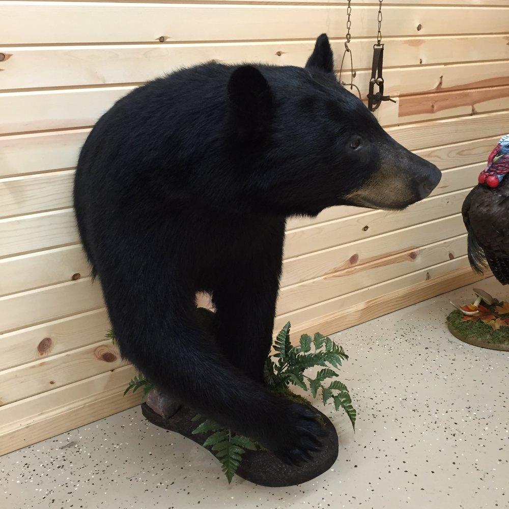Black-Bear-1.JPG