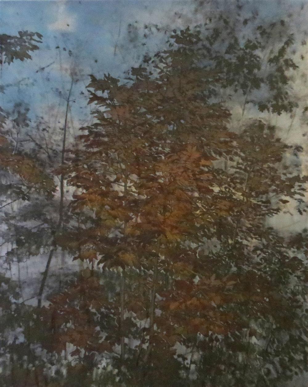 Érablière no 1  techniques mixtes sur toile  51 x 40 cm 2018