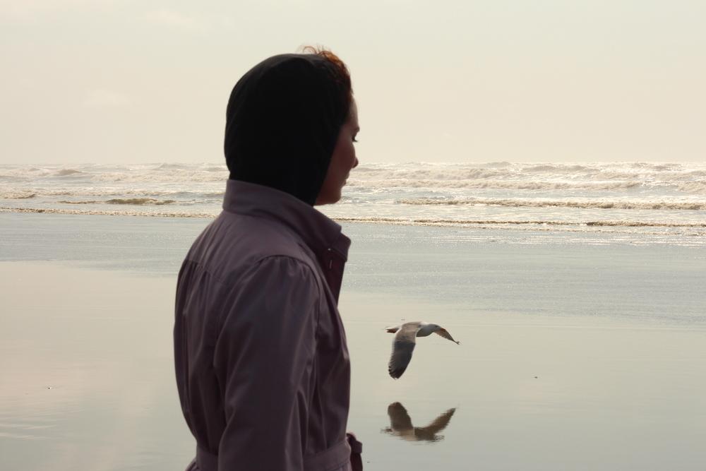 Bird. Shore. Reflection
