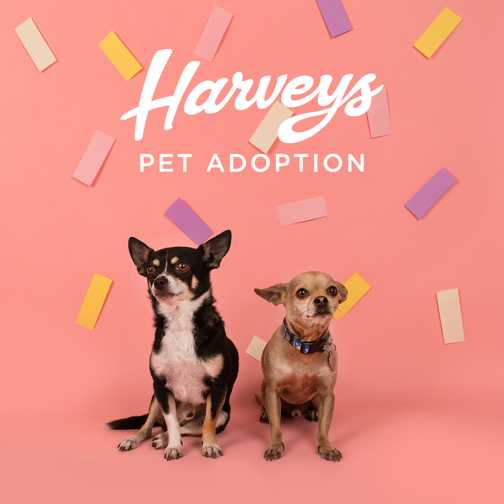 Harveys Pet Adoption