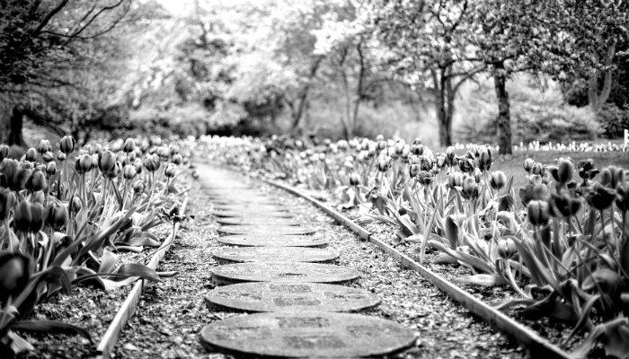 Flower Path.png