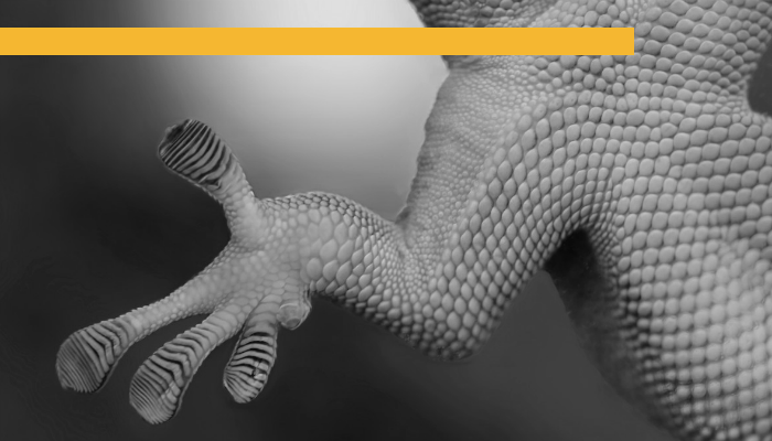 Gecko Hand.png
