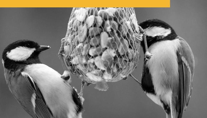 Birds Feeding Branded II.png
