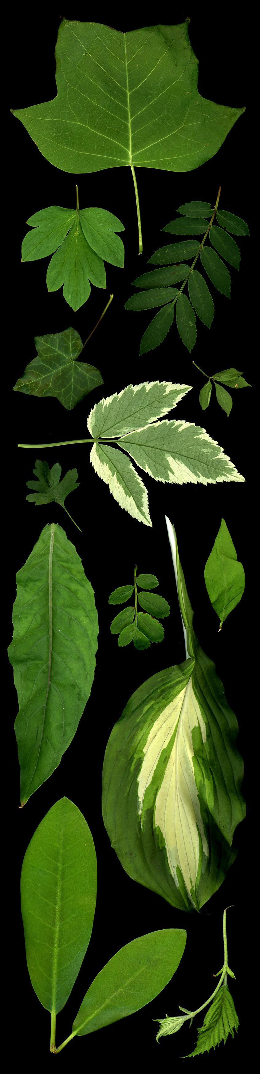 leaf_panel_1.jpg