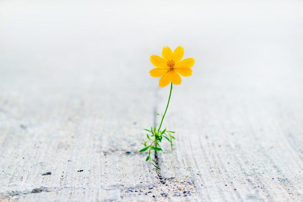 flower in concrete.jpg