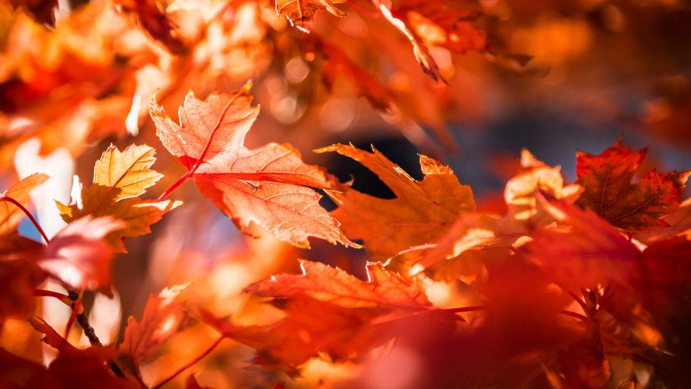 Leaves - DSC_3891.jpg