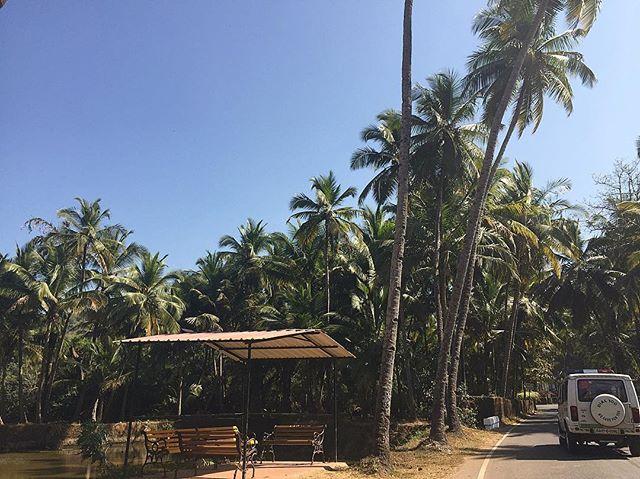 Bus stop 🚌🌴 #visitgoa
