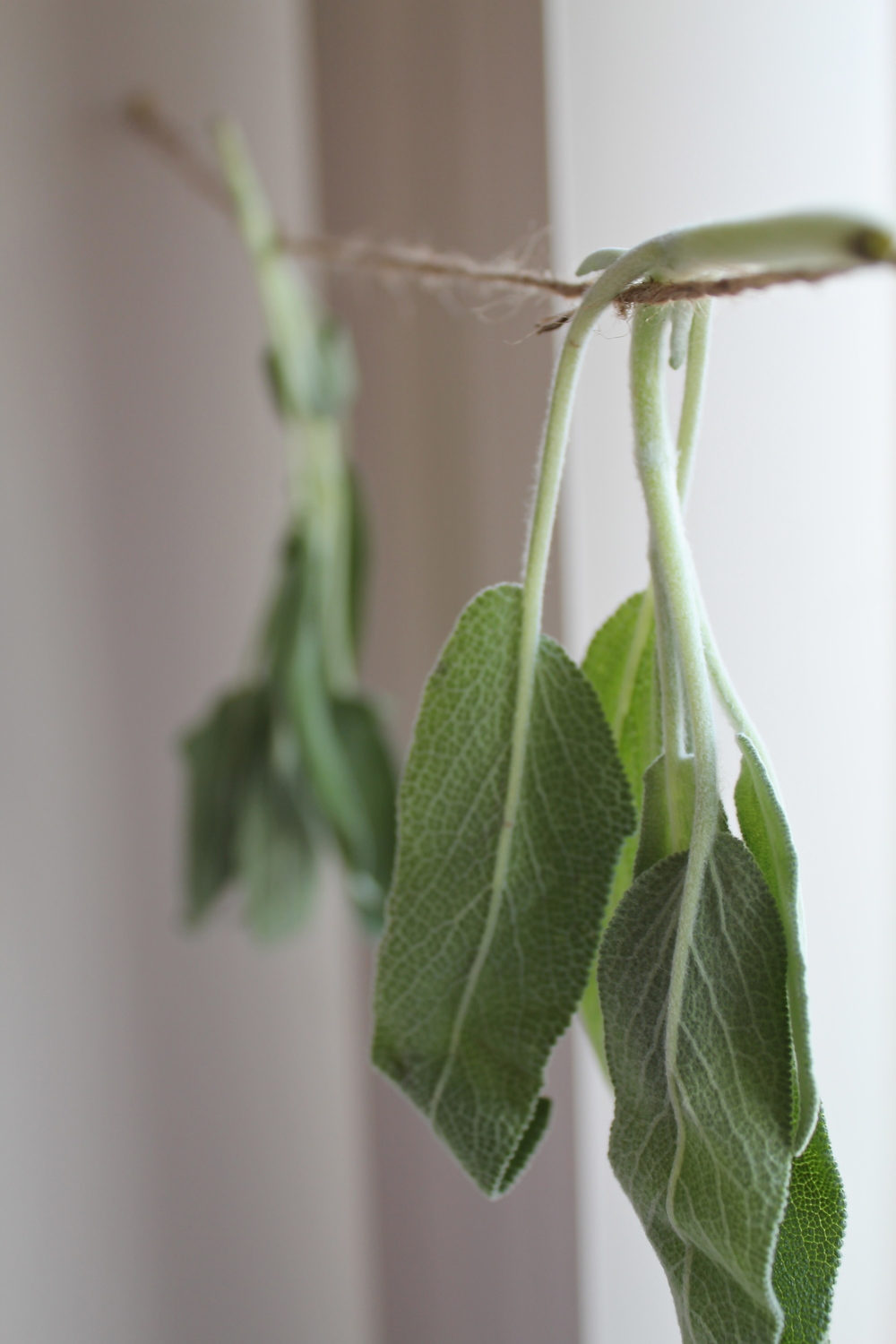 diy sage peppermint toothpaste botanical medicine recipe