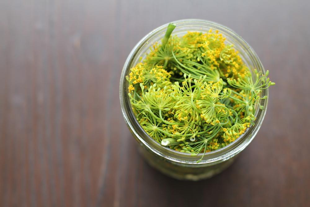 diy herb infused oils botanical medicine herb recipe