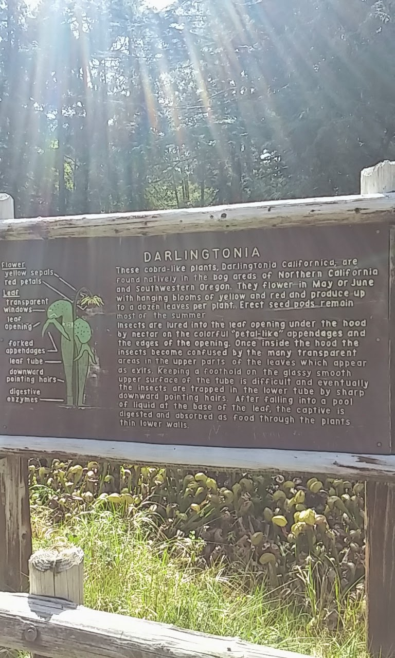 Get away for a few days in Oregon. Carniverous plants at  Darlingtonia Natural Site