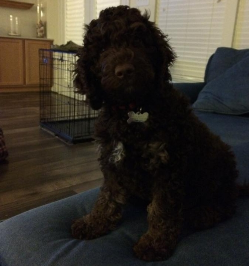 This is GUS!!! Such a cute doodle. <3