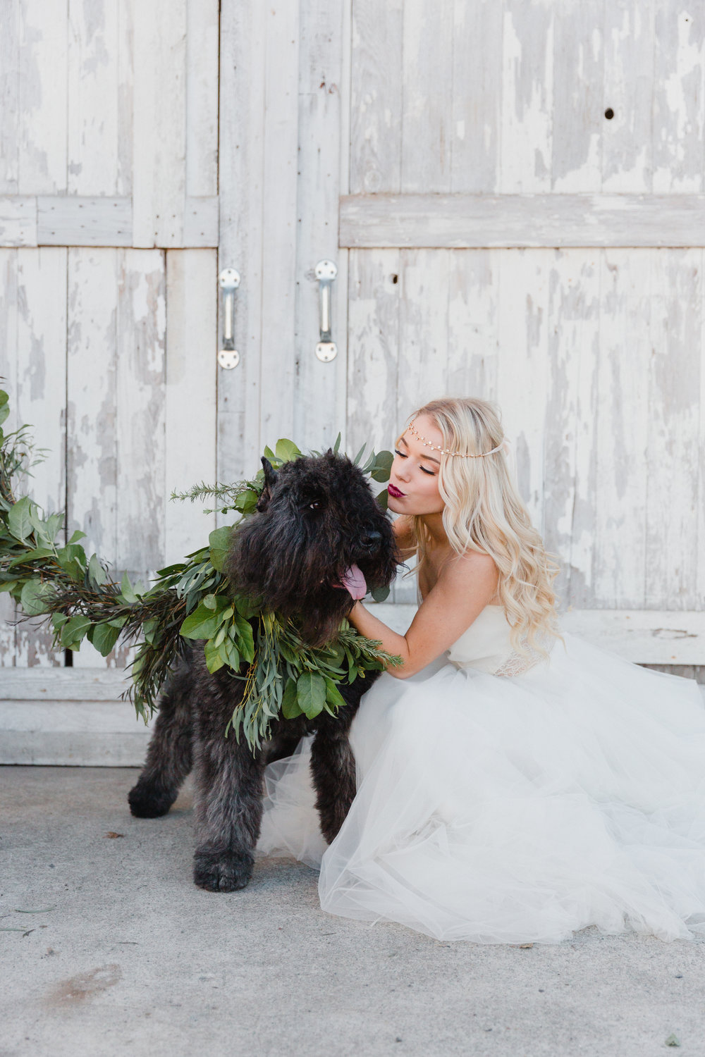 Violet the Bouvier wearing her greenery garland collar and leash by From the Ground Up Floral.