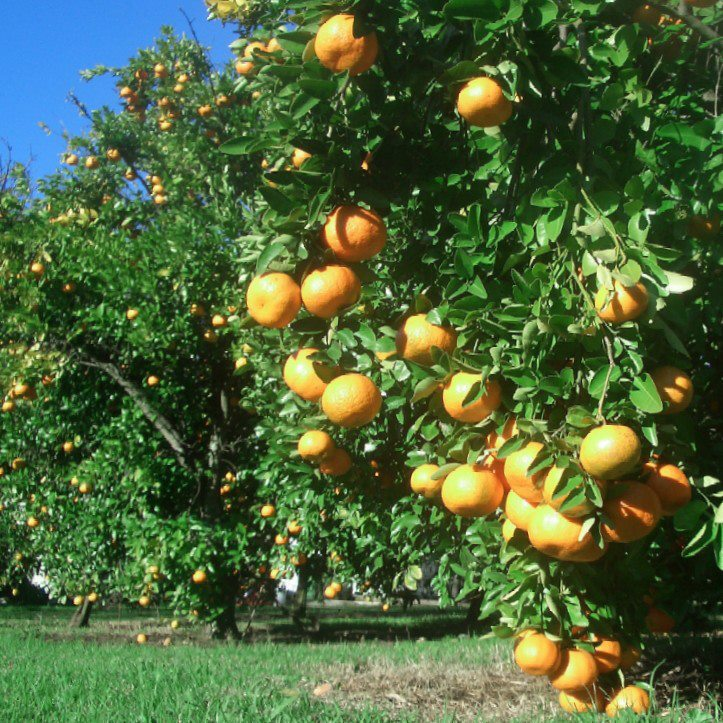 JFG_citrus.jpg