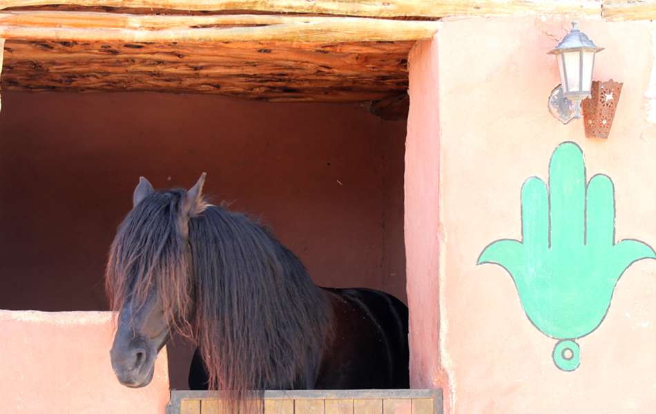 cheval fatima.JPG
