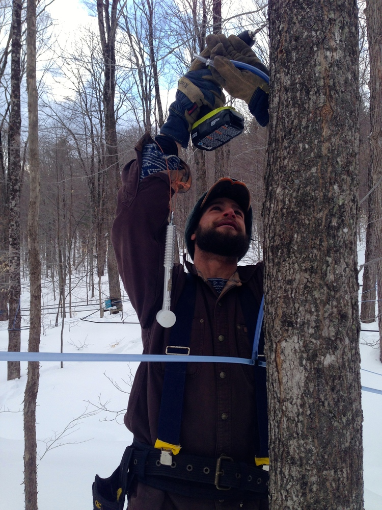 Dan Sullivan tapping sugar maples on a clear day in early March of 2015. This year brought record snow to Vermont, so sugar season started a little later than normal and lasted longer than expected.