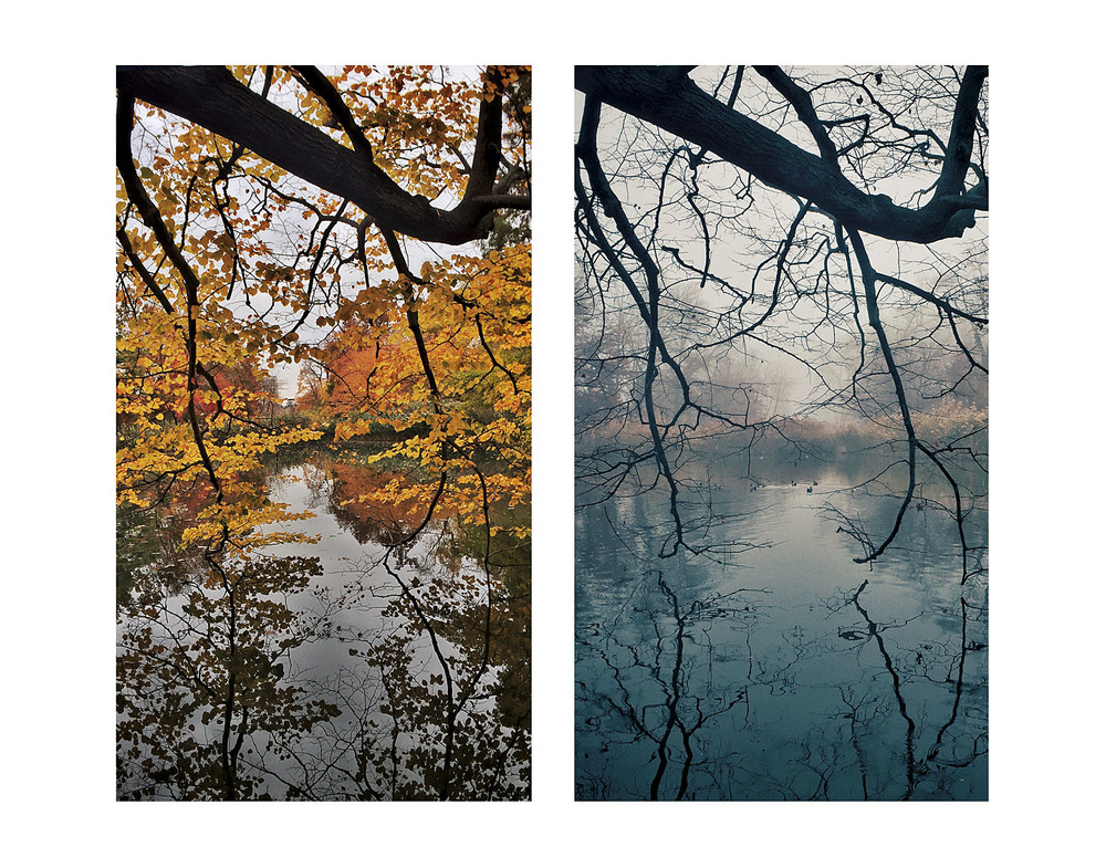 """Tree Branch Diptych"""