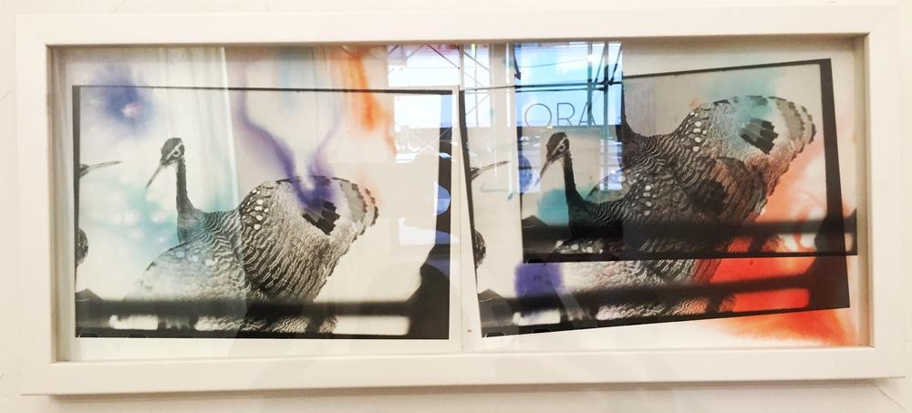 """Japanese Birds"" (2016)"