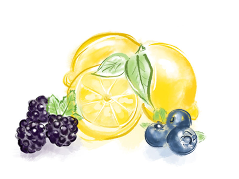 fruit-illustrations-2.jpg