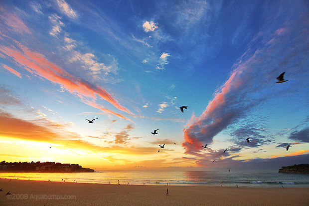 bondi-sunrise-birds.jpg