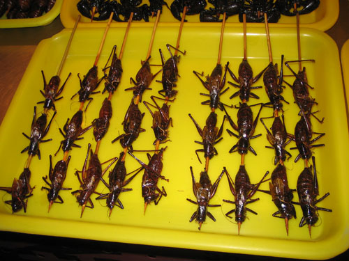 A tray of Locusts. These didn't taste so bad.