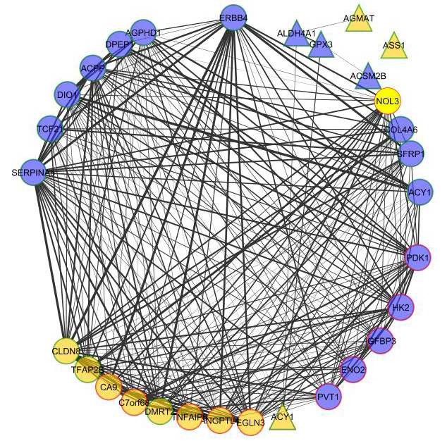 An example network representing the differentially expressed, statistically significant genes and proteins that have been linked to cancer.  The triangles represent proteins, circles represent genes. The thickness of the edges (lines) signifies increasing correlation between the nodes.  The yellow color represents ccRCC-specific association in current literature. Red border – upregulated, green border – downregulated.