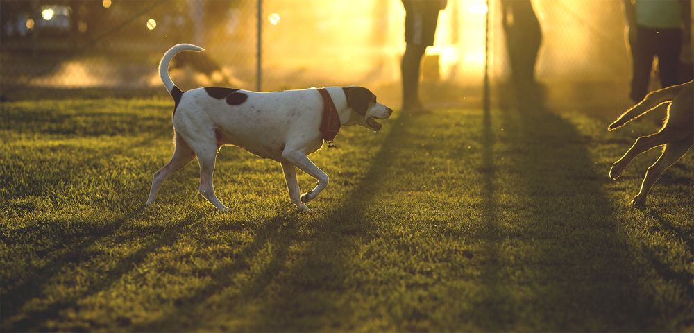 Dogpark_16.jpg