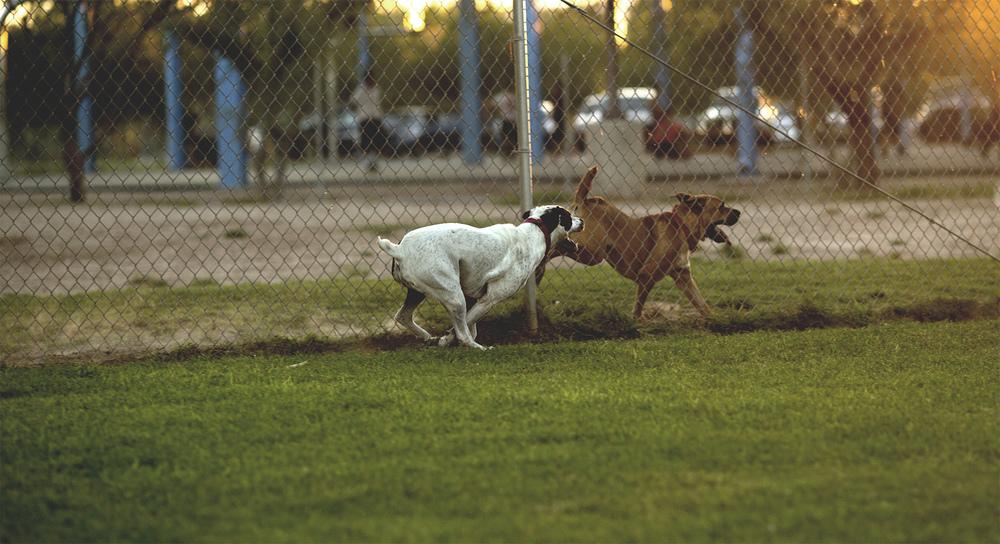 Dogpark_17.jpg