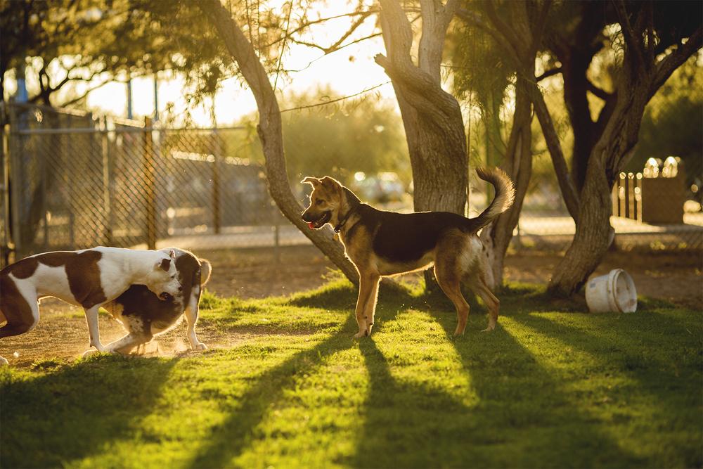 Dogpark_23.jpg