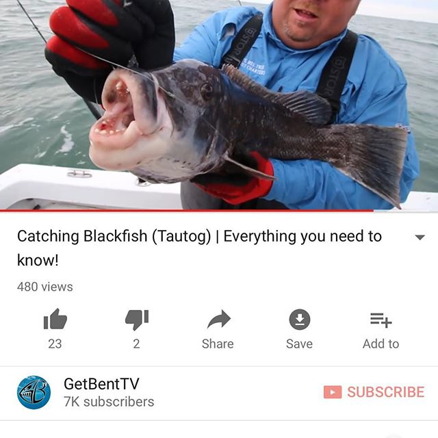 😳 Quite possibly one of our 🚨best🚨 cinematic productions to date!!!! Everything you need to know about catching GIANT Blackfish or what is commonly known as Tautog (bob barker voice)!! 👆Link in the Bio 👆SUBSCRIBE & Enjoy Homies!!!!👆 @getbenttv #getbenttv ▫️▫️▫️▫️▫️▫️▫️▫️▫️▫️▫️▫️▫️▫️▫️#fishing #blackfish #tautog #saltlife #catchandrelease #newengland #bassfishing #fishingislife #youtube #youtubevideo #youtubechannel #outdoors #pesca #massachusetts