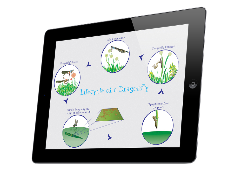 Lifecycle of a Dragonfly App