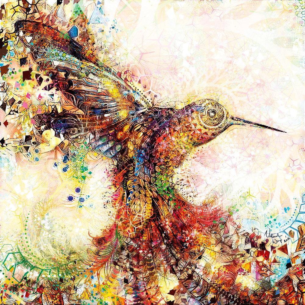 Natural Warp :   Hummingbird of Paradise