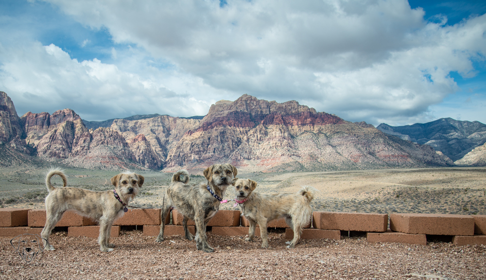 Red Rock Outdoor Bark Session