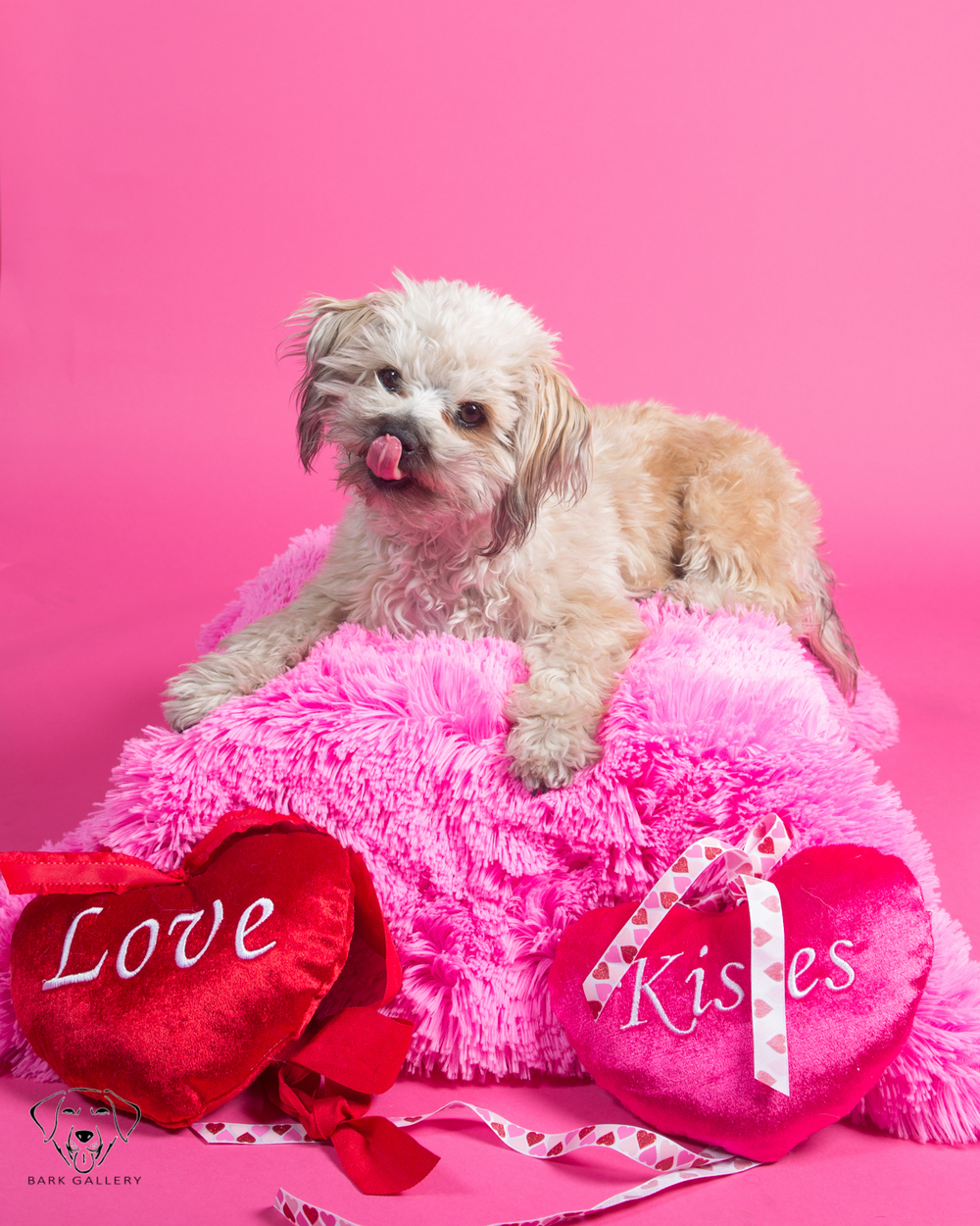 Bark Gallery Valentines Day Pet Photos