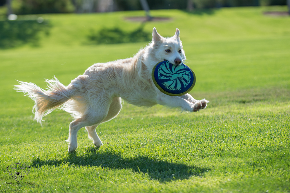 Patron playing frisbee in the park!