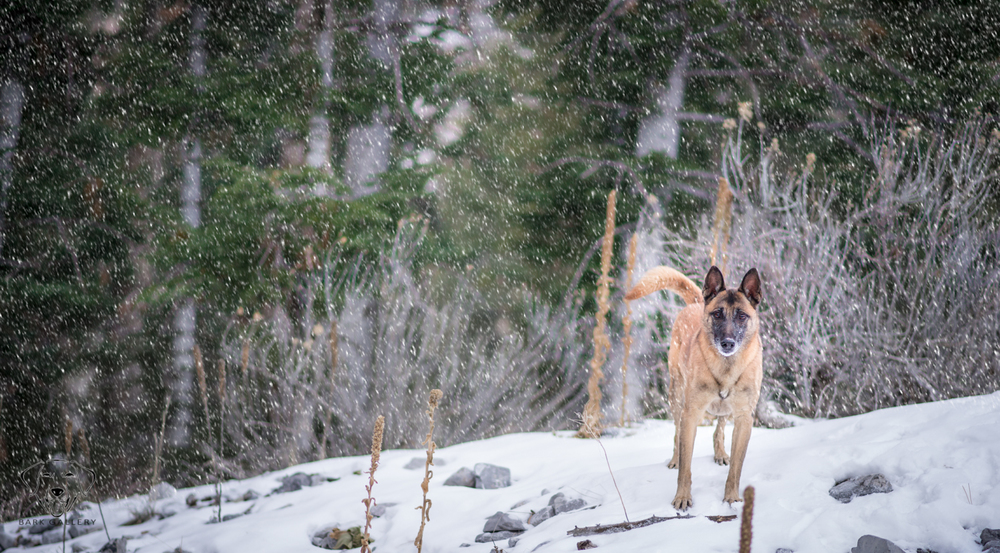 Cricket enjoying the snow. Mt Charleston, Nevada