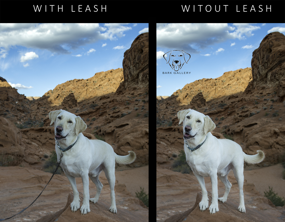 Before and After Leash Removal