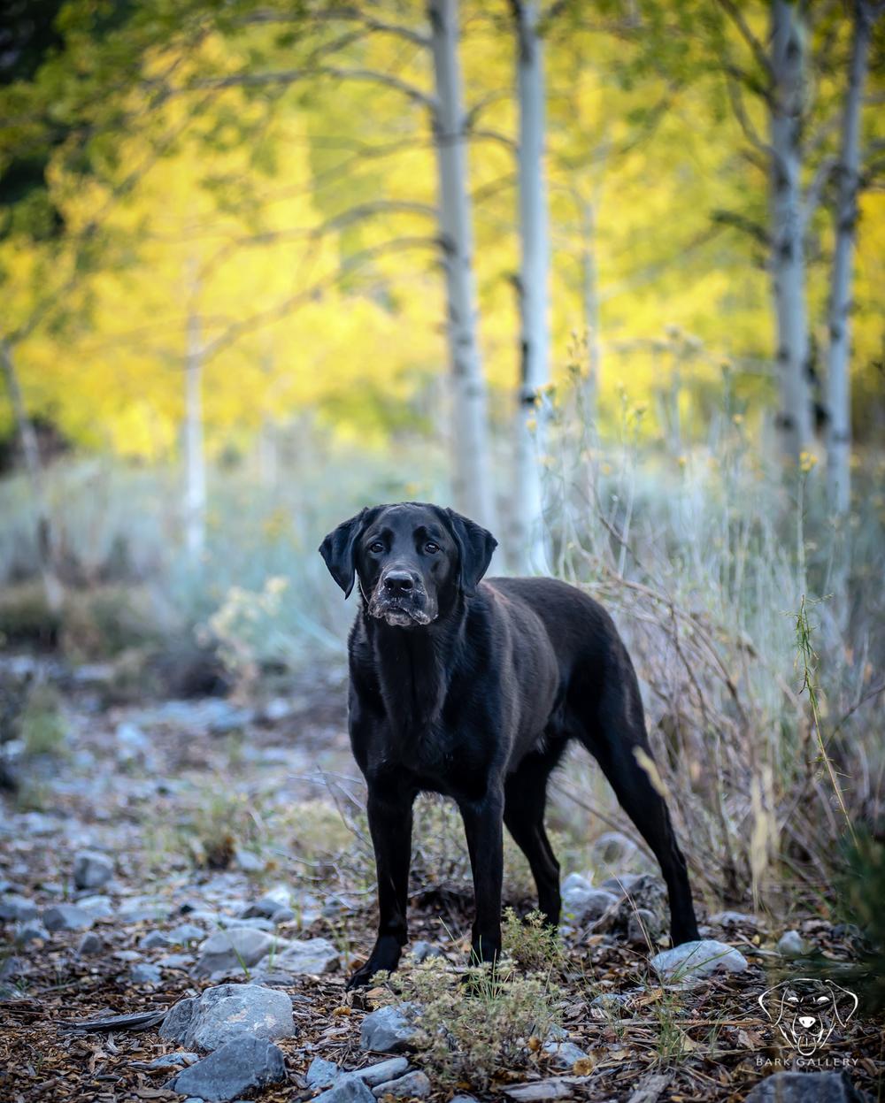 fall-dog-portrait