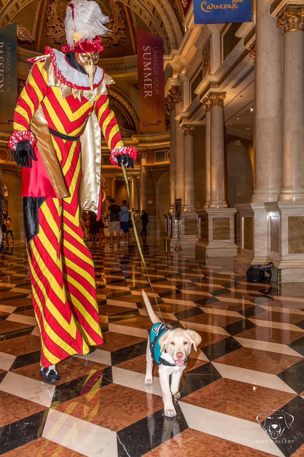 Fred going for a walk at the Venetian