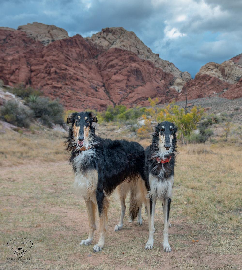 unique-dogs-portrait-photo-wolfhounds-outdoor