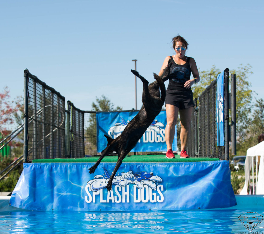 dog-sports-water-vegas