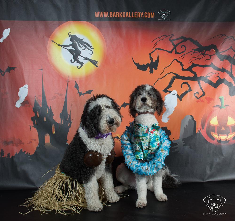 pet-photos-halloween