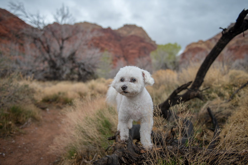 Red Rock Canyon Pet Photography