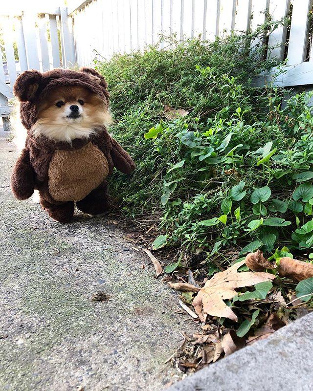 Thursdays by the daisy bush with my little brown bear 🐻🐶 xx #helloheartbreakstore
