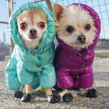 dogs in snowsuits