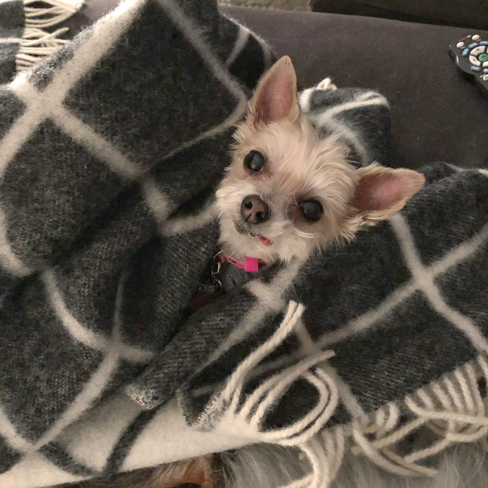 bean in hofn blanket