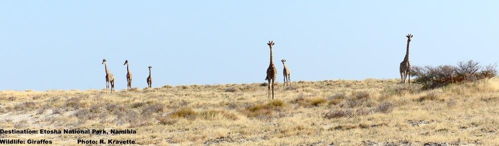 On the skyline...It's a bird; it's a crane; no, it's a Giraffe!